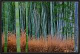 Arashiyama Bamboo Forest.