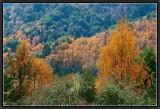 L'automne au Bhoutan.