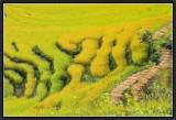 Rice calligraphy.