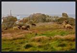 Pastorale.