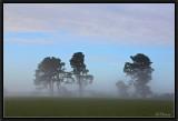 Misty Awakening.