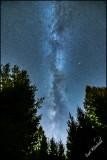 Milkyway erupts thru the Pines.