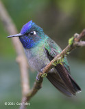 Hummingbird, Violet-headed (male) @ enroute to Sun Sun Hotel