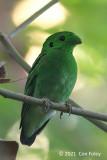 Broadbill, Green