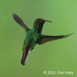 Emerald, Coppery-headed