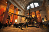 American Museum of Natural History 2019