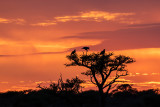Sunrise Nossob camp