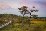 Sunrise over Torronsuo National Park