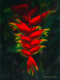 *******Gallery******* HIPSTA FLORA II