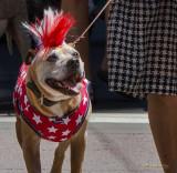 Proud Pup II