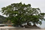 Tree of Love DSC_0736