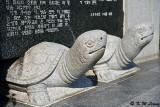 Stone tortoises DSC_2550