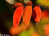 Leaves DSC_1707