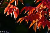 Leaves DSC_1708