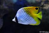 Fish DSC_2247