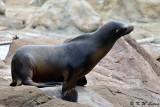 Habour Seal DSC_2137