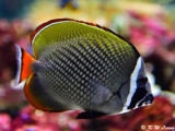 Fish DSC_2354