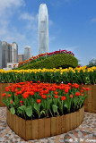 Tulip Display DSC_7463