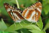 Butterflies (蝴蝶)