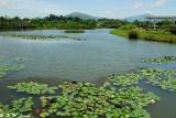 Wetland Park DSC_2457