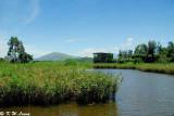 Wetland Park DSC_2447