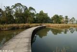 Wetland Park DSC_0492