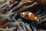 Fish @ Aquarium