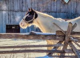 Equine Pal Posing P1060389-91