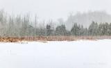 20190310 Snowfall P1070555