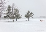 20190310 Snowfall P1070573-5