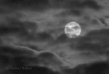 Clouded Worm Moon P1080405