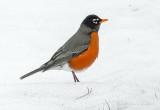 Robin On Ice P1080484