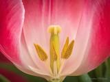 Tulip Interior P1090693-5