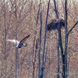 Heron Nest P1110055