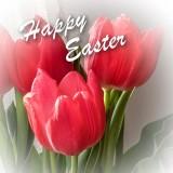 Happy Easter P1090261