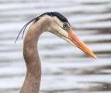 Heron Profile P1110295