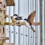 Swallow Landing P1120002-01