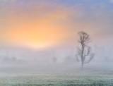 Tree In Foggy Sunrise P1400547-51