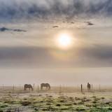 Three Horses On A Foggy Morning P1400892-8