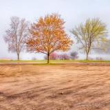 Fog Beyond Spring Trees P1130556-8