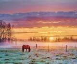 Horse & Ground Fog At Sunrise P1400767-72