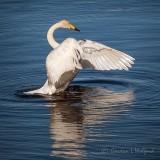 Stretching Swan P1140252