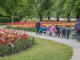Tulip Festival 2019 Leftovers P1150818