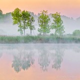 Trees In Sunrise Ground Fog P1410472