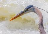 Heron Beside Rapids DSCN34341