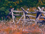 Split-rail Fence & Wild Daisies DSCN34976