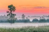 Sunrise Ground Fog P1420211-3