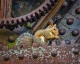 Squirrel On The Bascule Bridge DSCN37111