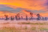 Tree Row At Sunrise P1430141-7