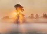 Sunrise Through Ground Fog P1430673-9